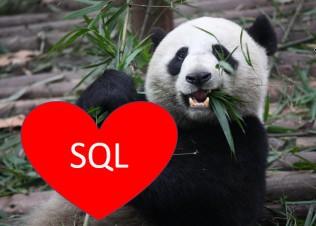panda holding SQL heart