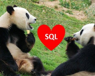 two pandas and a heart with the word SQL